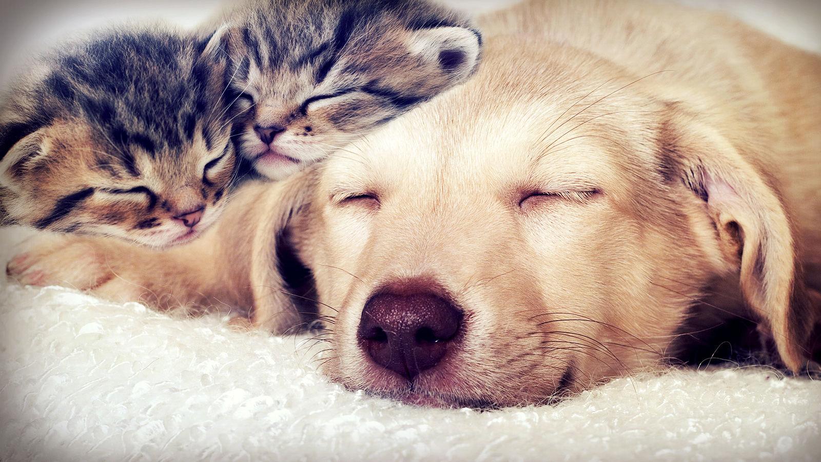 kedi ve köpek 1