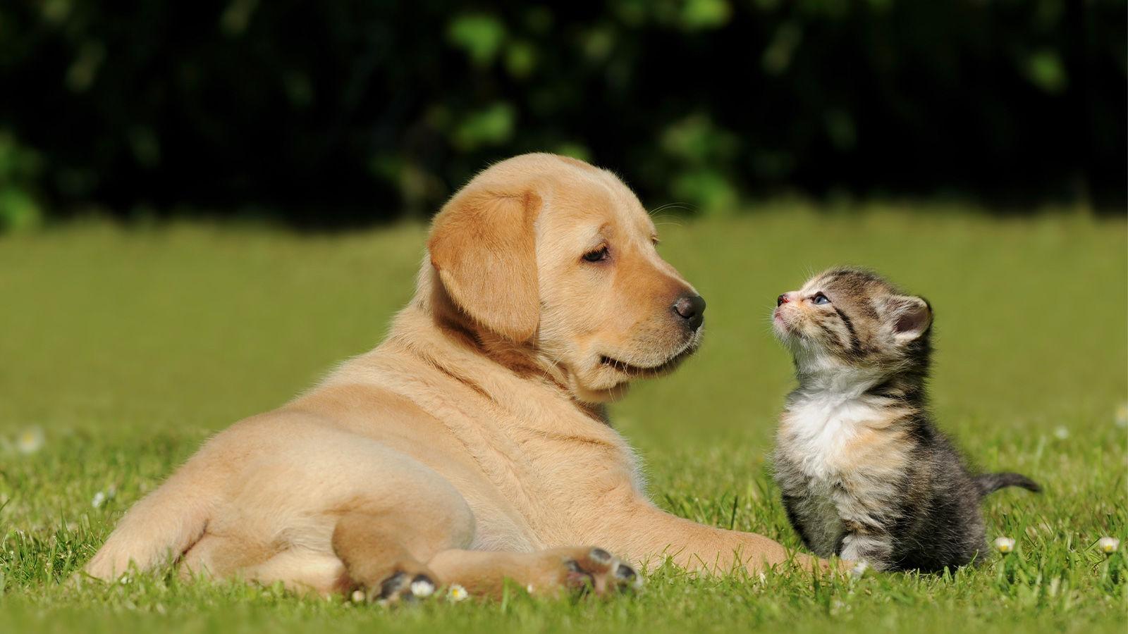 kedi ve köpek 4